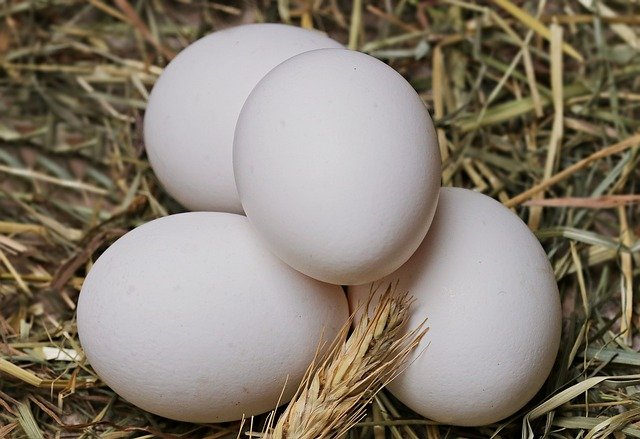 four white eggs in the straw