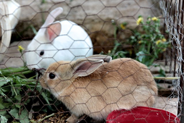 one white and one beige bunny in a cage