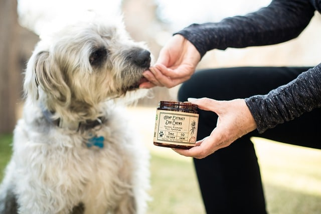 woman giving a dog hemp treats