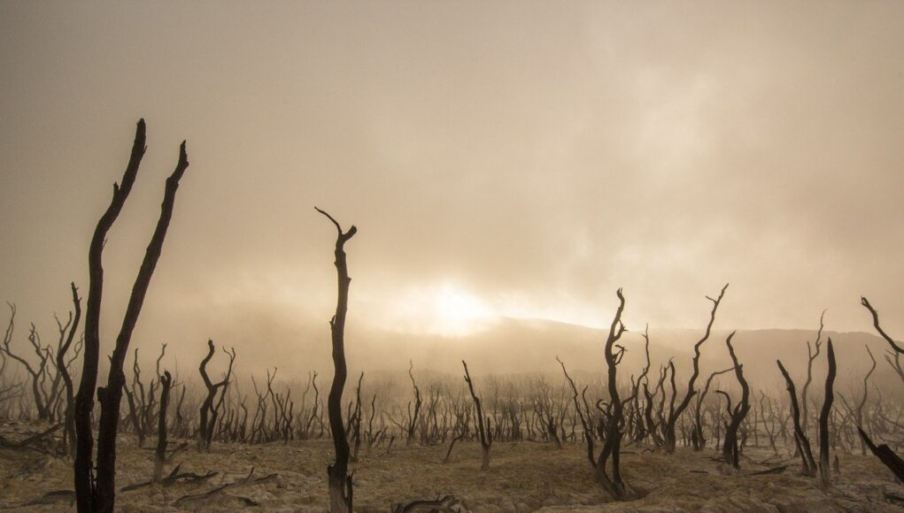 dead trees after a forest fire