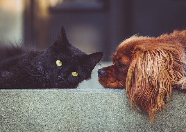 a black cat and an orange dog laying on a step together