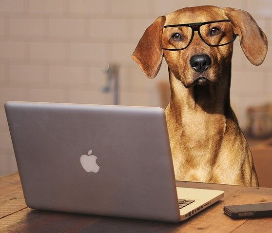 dog with glasses on a mac