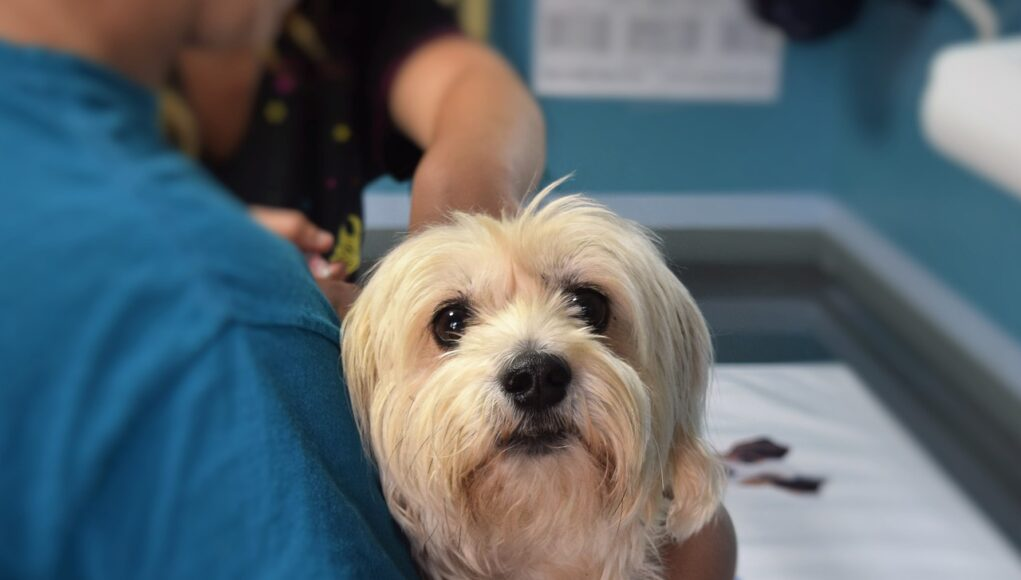 dog, veterinary, pet