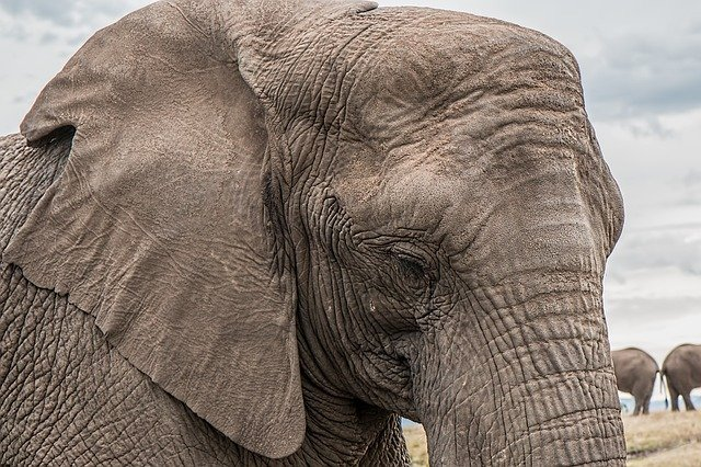 statistics show there are only 350,000 elephants left in africa