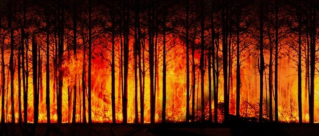2020 wasn't just the COVID-19 year. Australia recorded its hottest year ever, which caused massive wildfires.