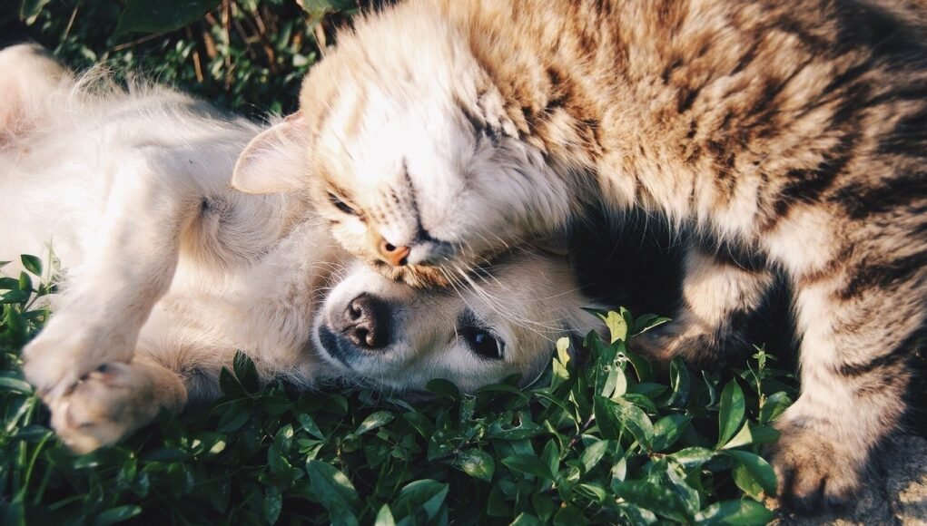 cat and dog rolling in the grass