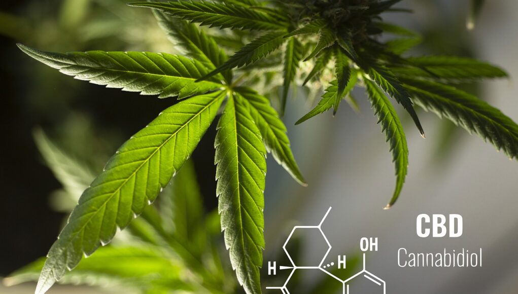 cbd for pets facts cover