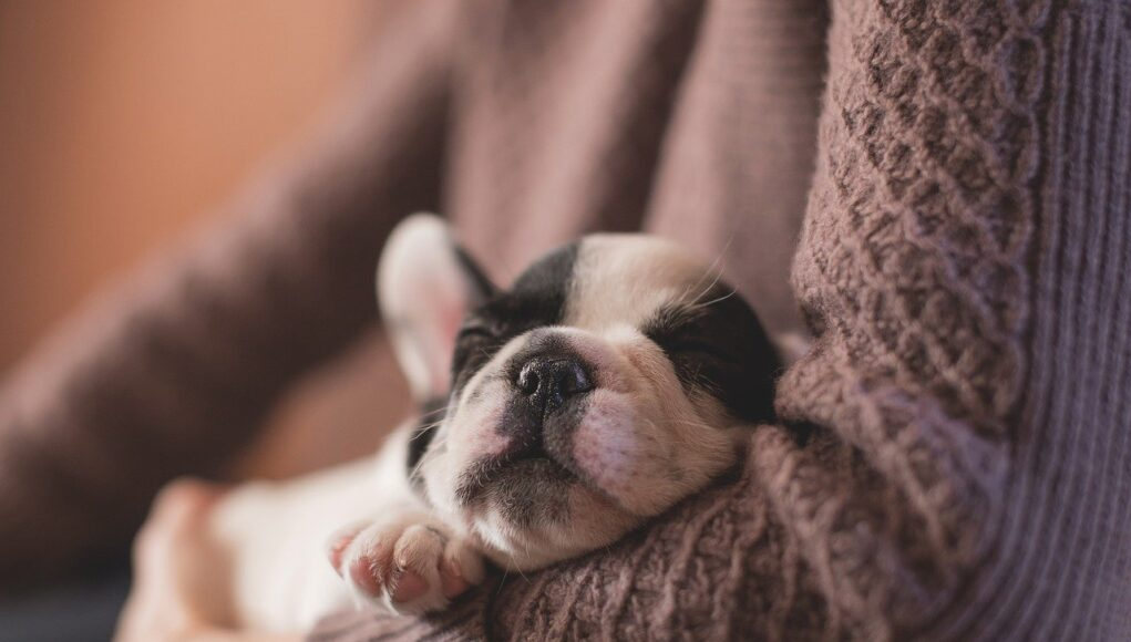 new puppy checklist - puppy sleeping in owner's arms