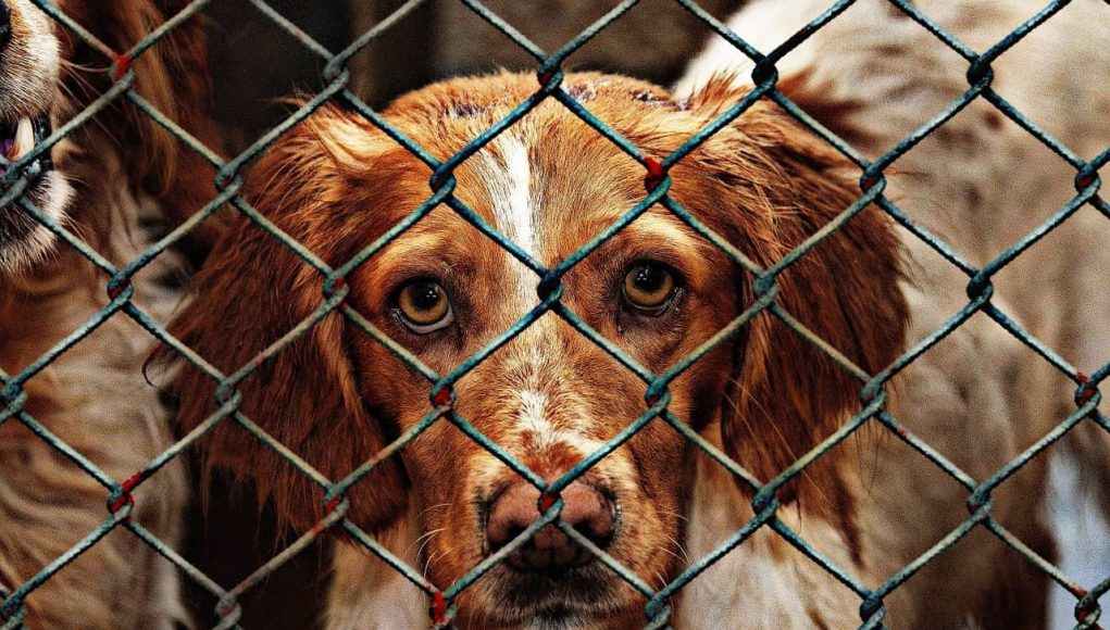 Annually, over 10 million animals in the US are abused to death.