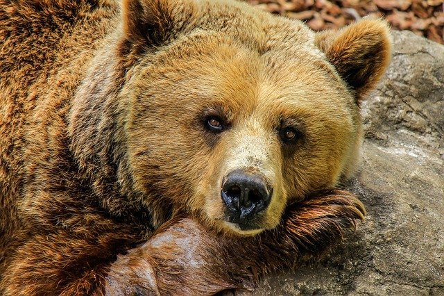 we shouldn't only be looking at how many bear attacks there are per year because we're doing much more damage to them
