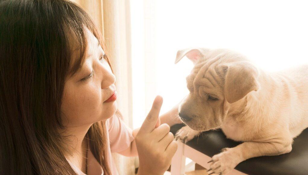 dog behavior problems cover