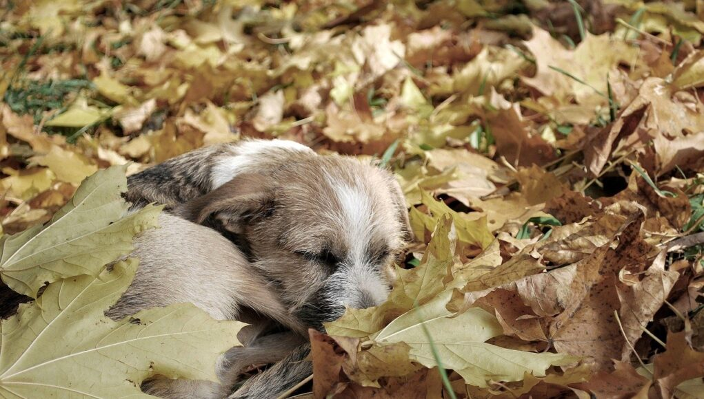stray animal statistics cover, puppy in the leaves
