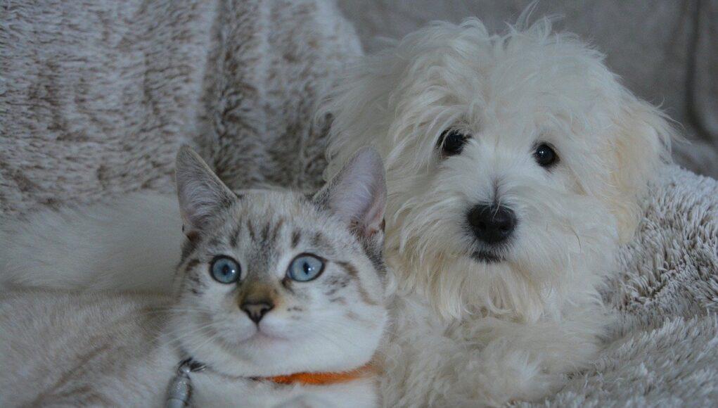 pet industry statistics cover