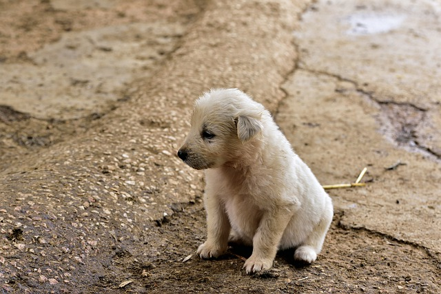 Dogs Comprise 65% of All Animals Suffering Abuse