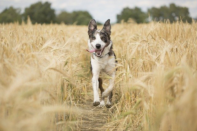 An important part of how to care for a dog is walking them at least twice a day.