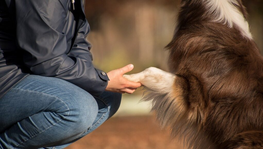 pet owners statistis - paw in hand, man and dog in the forest