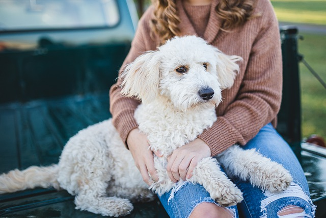 a white dog and a girl sitting on a car