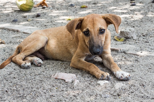 Sadly, many street animals end up dying from infections and diseases that are preventable.