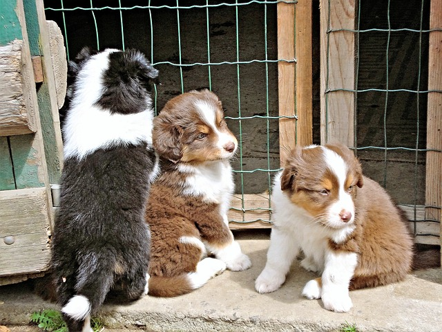Training a puppy when it's seven weeks old is crucial. The sooner you start, the better.