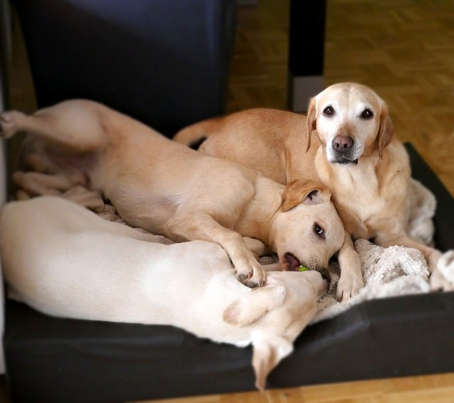 three dogs playing in a dog bed