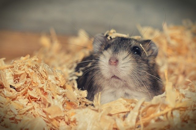 The monthly cost for a hamster's well-being is merely $10, excluding water, a cage and a wheel to burn off some extra calories.