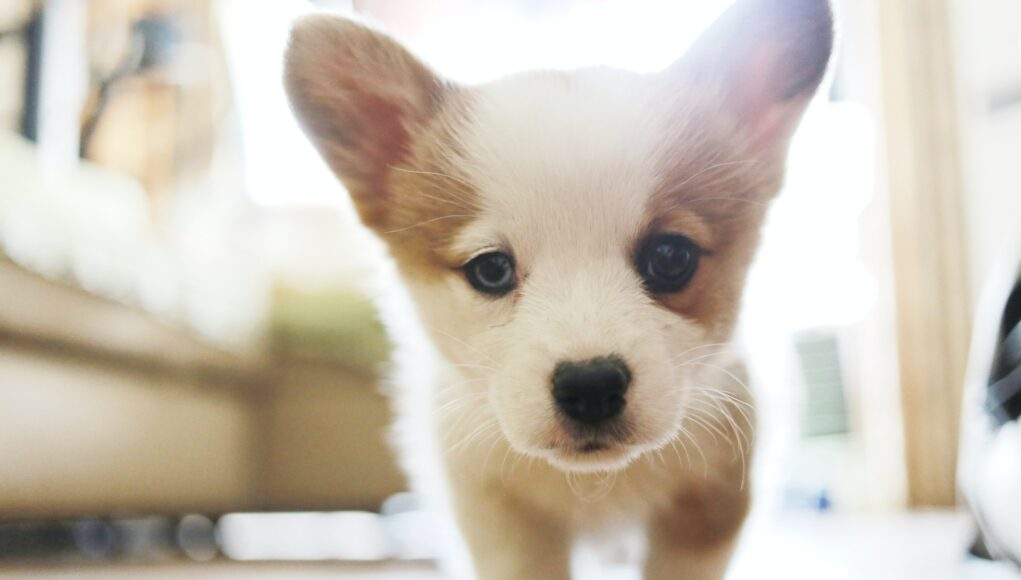 puppy looking into the camera