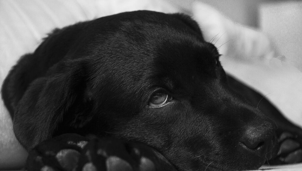 what to give a dog for upset stomach cover