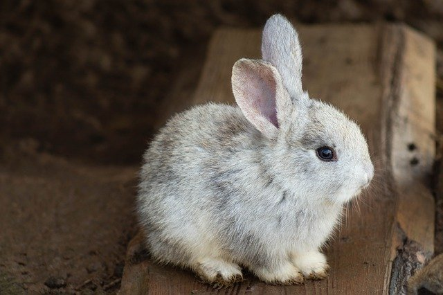 you should put their housing area somewhere they can interact with you, as rabbits are very social animals