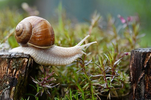 Since they're small and don't require any walks, sails are very easy pets to keep. And they'll be the happiest if you get them at least one more friend for company. <strong>All snails need a suitable terrarium with 1–2 inches (2.5–5cm) of soil.