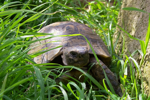 Turtles need fresh 23.8–30⁰C (75–86⁰ F) water and can live up to 30 years.