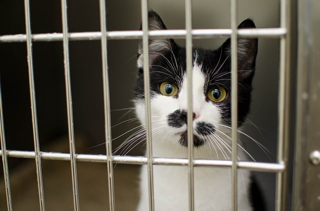 As many as 70% of cats in shelters are euthanized.