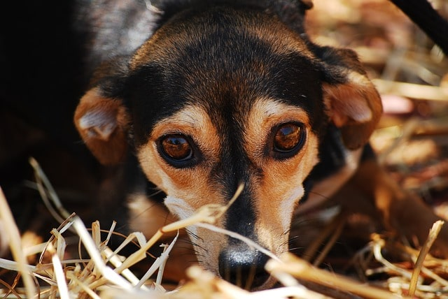 Every Year, About Three Million Shelter Animals Are Euthanized In the US