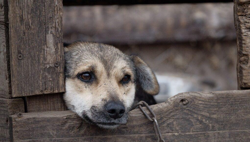 animal shelter statistics cover