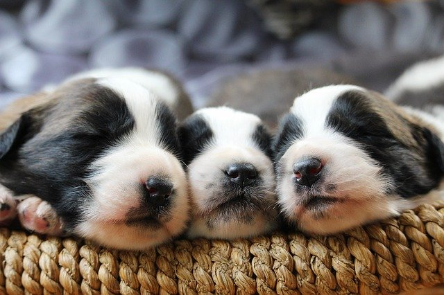 three sleeping puppies - The time a puppy would spend sleeping largely depends on its age.