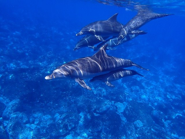 a group of young dolphins in the sea