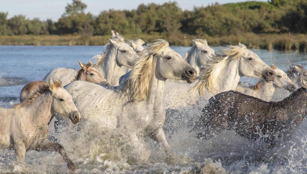 horse statistics cover