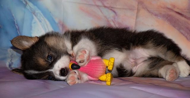 Tiny puppy playing with a toy flamingo.