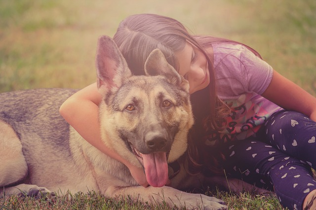 Small girl holding onto a large German Shepherd