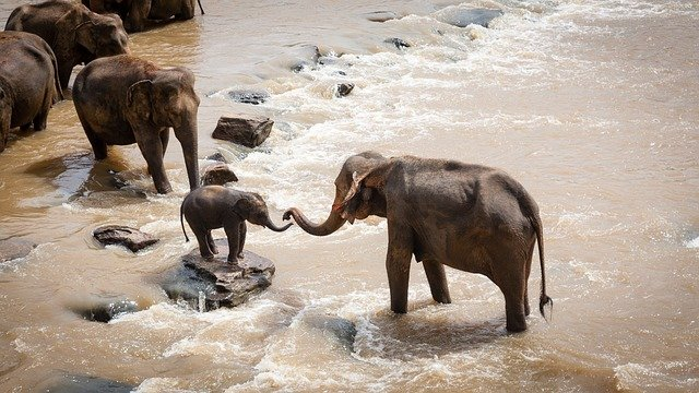 Larger elephant reaching out trunk to help baby elephant in a river