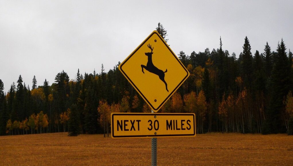 A yellow road sign warning drivers to be vigilant to avoid deer accidents for the next 30 miles