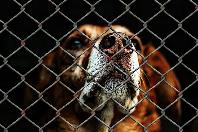 Sad looking dog behind a wire website