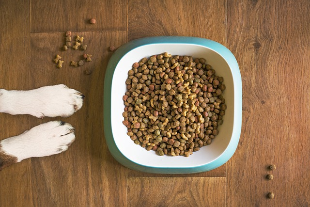 Bowl of dog food with two white dog paws next to it