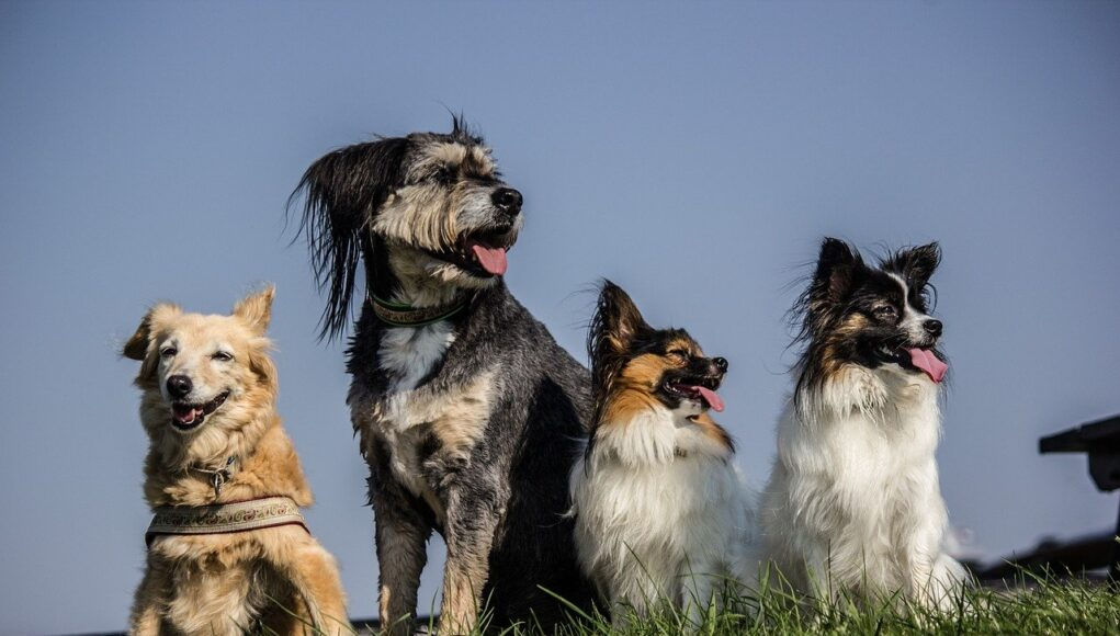 Four dogs sitting in a green field