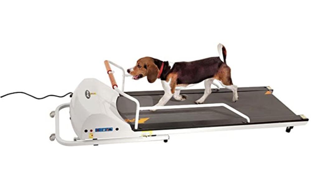 dog on a treadmill cover