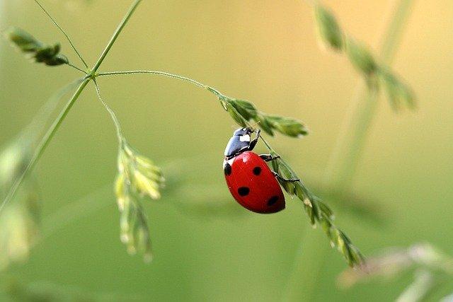 Lady bug on a green plant