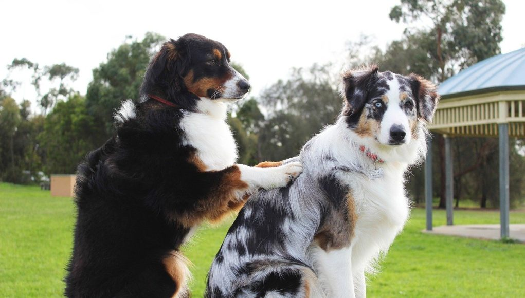 One dog gives a massage to other dog